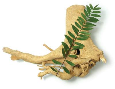 Photo of Rễ Cây Mật Gấu Mua Ở Đâu Uy Tín và Có Tác Dụng Gì