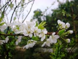 Photo of Top 11 Mùa hoa đẹp nhất ở Việt Nam bạn không thể bỏ qua