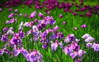 Photo of Top 15 Loài hoa đẹp nhất thế giới