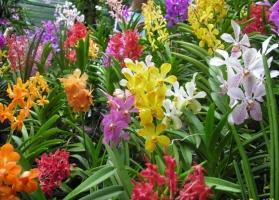 Photo of Top 19 Loài hoa tiết lộ tính cách của bạn đầy thú vị