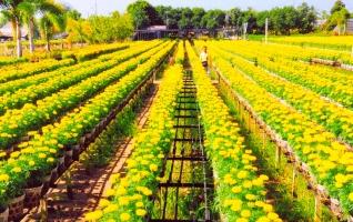 Photo of Top 5 Làng hoa truyền thống không thể bỏ qua mỗi dịp Tết