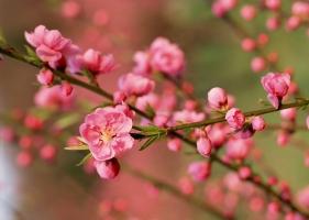 Photo of Top 5 Loài hoa Tết có độc bạn phải cẩn thận