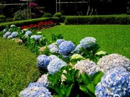 Photo of Top 7 Cây cảnh độc hại được trồng phổ biến nhất hiện nay
