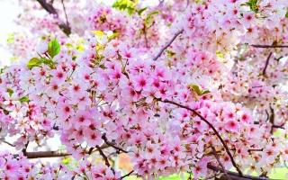 Photo of Top 8 Loài hoa có hình dáng lạ kì nhất thế giới