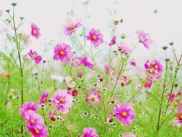 Photo of Top 8 Loài hoa có tác dụng chữa bệnh tốt nhất có thể bạn muốn biết