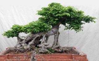 Photo of Top 8 Loại cây cảnh giúp cho không khí nhà bạn trở nên hoàn hảo