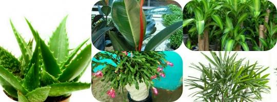 Photo of Top 8 Loại cây cảnh giúp khử độc tốt nhất cho ngôi nhà của bạn