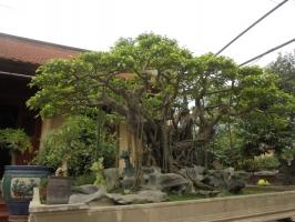 Photo of Top 8 Loại cây cảnh quý hiếm giá tiền tỷ ở Việt Nam