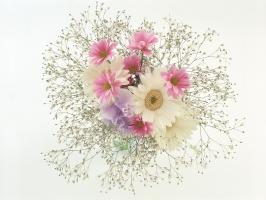 Photo of Top 9 ý nghĩa của các loài cây và hoa ứng dụng trong phong thủy