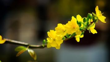 Photo of Top 9 Loài hoa đẹp nhất Việt Nam