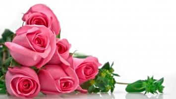 Photo of Top 9 Loài hoa đẹp nhất làm say đắm lòng người
