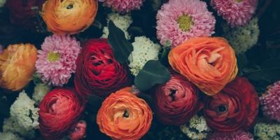 Photo of Top 9 Loài hoa đẹp và ý nghĩa nhất nên dành tặng người yêu vào ngày Valentine 14/2
