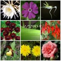 Photo of Top 9 Loài hoa hiếm nhất thế giới