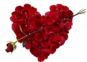 Photo of Top 9 Loài hoa lãng mạn gắn liền với tình yêu