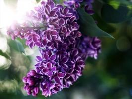Photo of Top 9 Loài hoa màu tím đẹp nhất