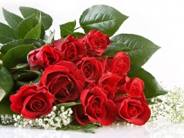 Photo of Top 9 Loài hoa tốt cho sức khỏe và làm đẹp