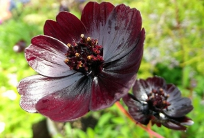 Photo of Top 9 Loại hoa hiếm và đẹp nhất thế giới